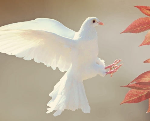 A dove representing the Holy Spirit